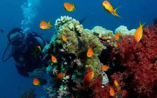 submarinismo-en-la-costa-brava-lux-connect
