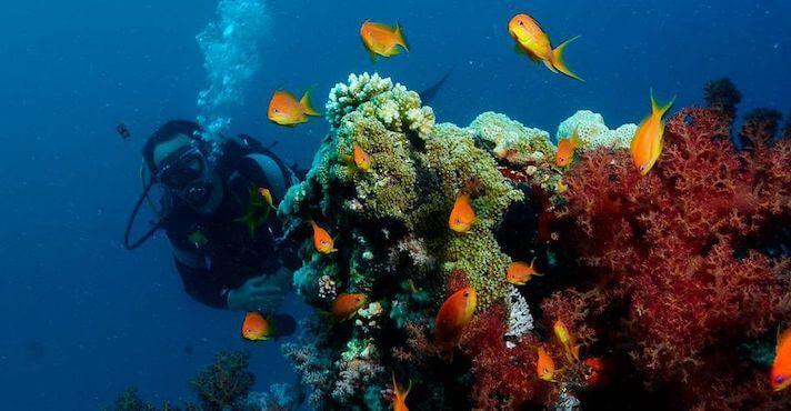 submarinismo-en-la-costa-brava